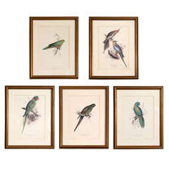 A Set of Five Vintage Parrot Prints