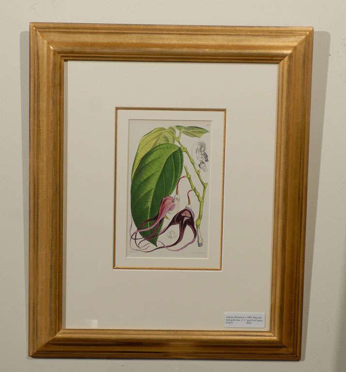 Set of Four Antique Botanicals Prints Framed at 1stdibs