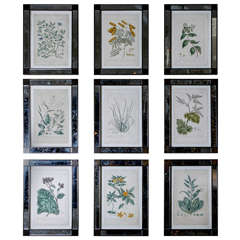 18th Century Hand Colored Etchings