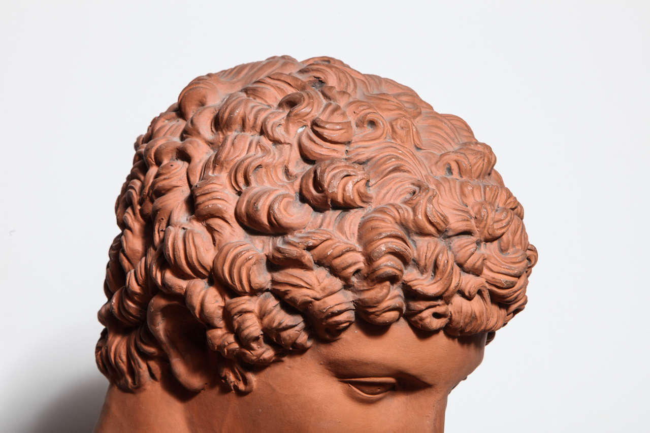 19th Century Terra Cotta Bust of Antinous 7