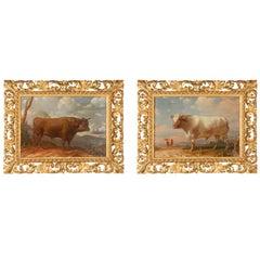 Rare 18th Century Italian Bull Paintings