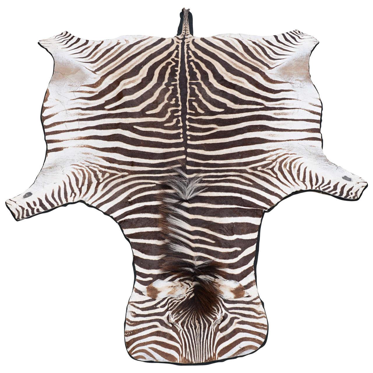 Vintage Zebra Skin Rug With Black Felt Backing At 1stdibs