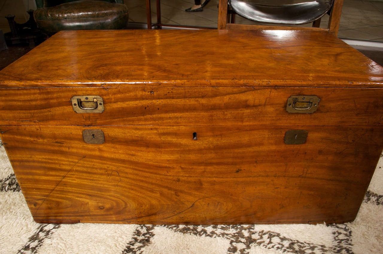 Camphor wood chest at stdibs
