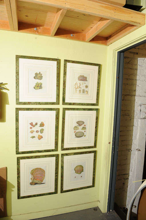 English Six Hand Colored Coral Engravings in Burl Wood Frames For Sale