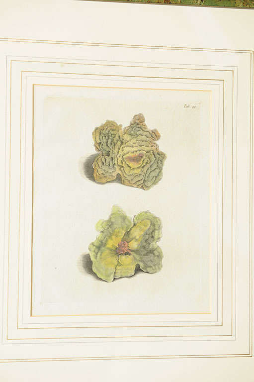 Six Hand Colored Coral Engravings in Burl Wood Frames In Good Condition For Sale In San Francisco, CA