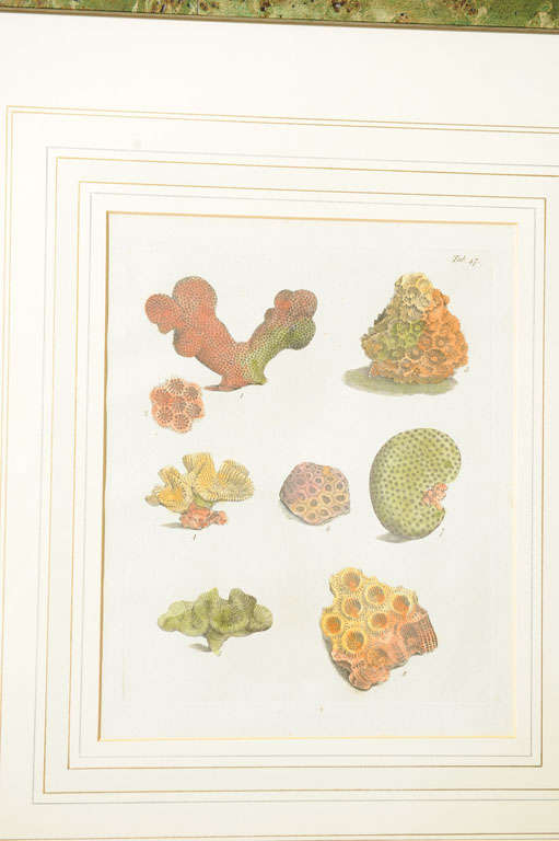 19th Century Six Hand Colored Coral Engravings in Burl Wood Frames For Sale