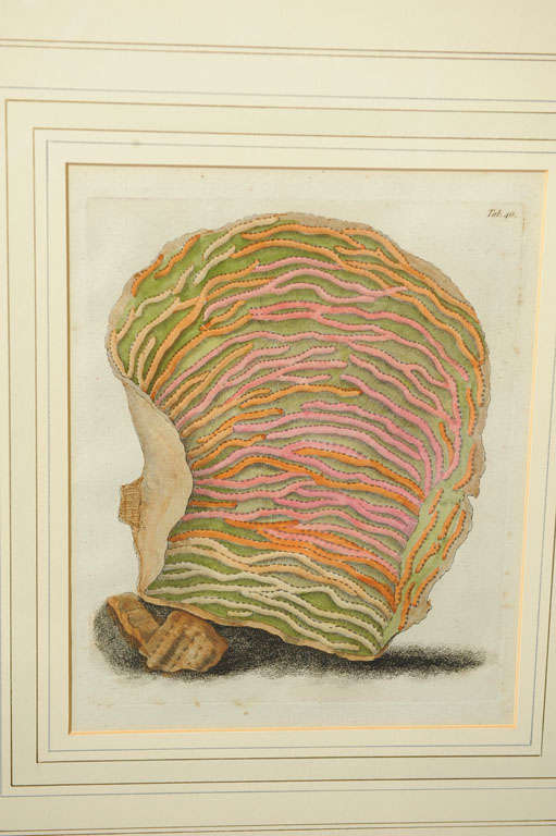 Six Hand Colored Coral Engravings in Burl Wood Frames For Sale 1