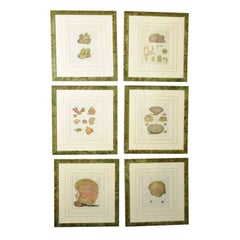 Six Hand Colored Coral Engravings in Burl Wood Frames