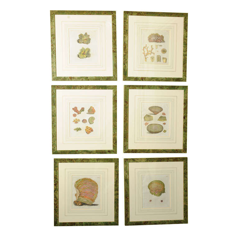 Six Hand Colored Coral Engravings in Burl Wood Frames For Sale