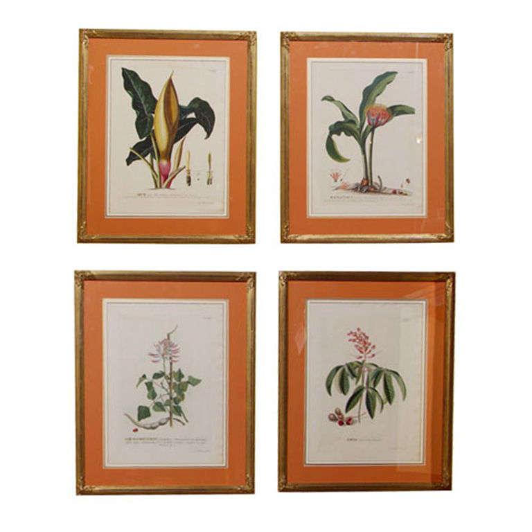 Set of Four Botanical Prints