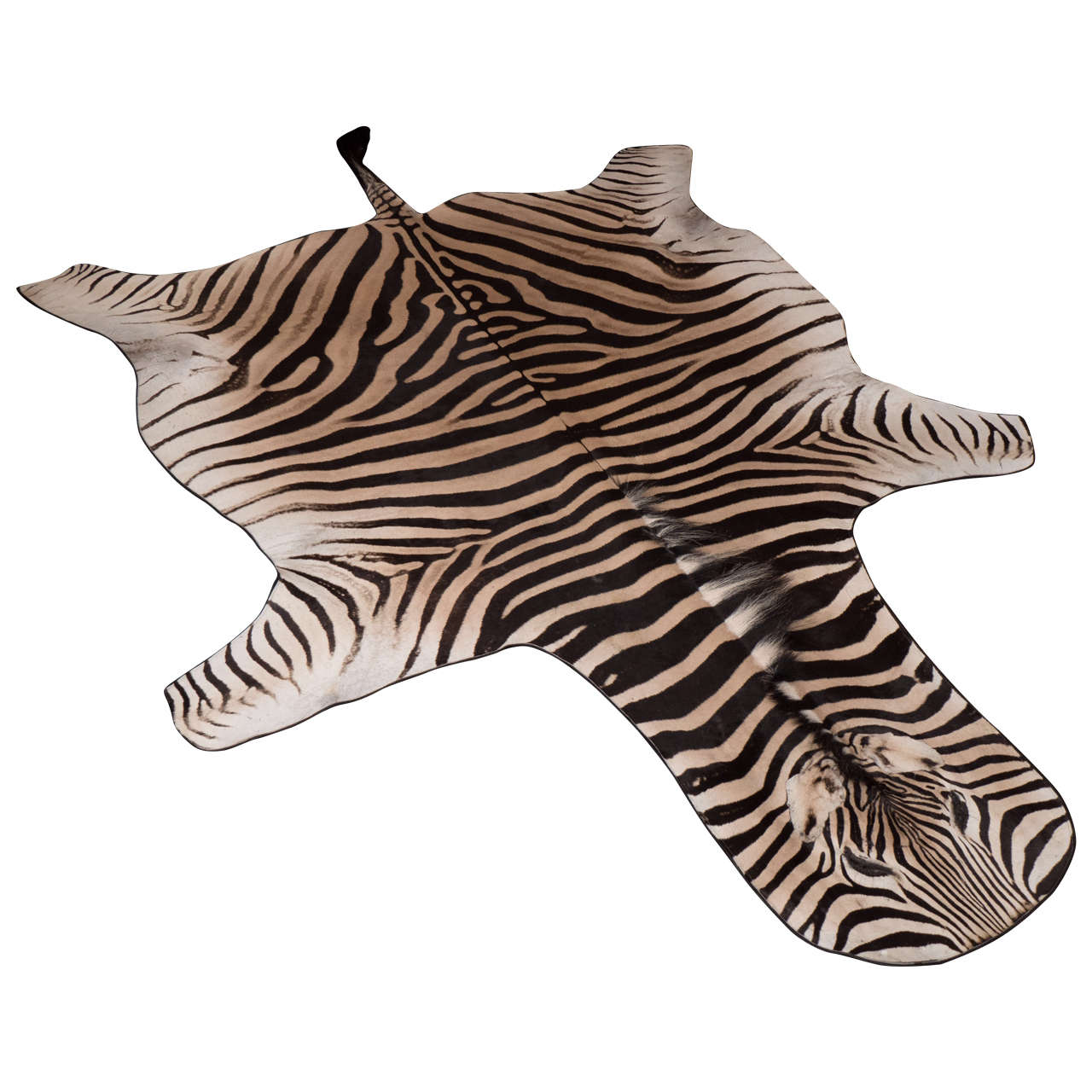 Zebra Rug with Black Felt Backing and Leather Piping