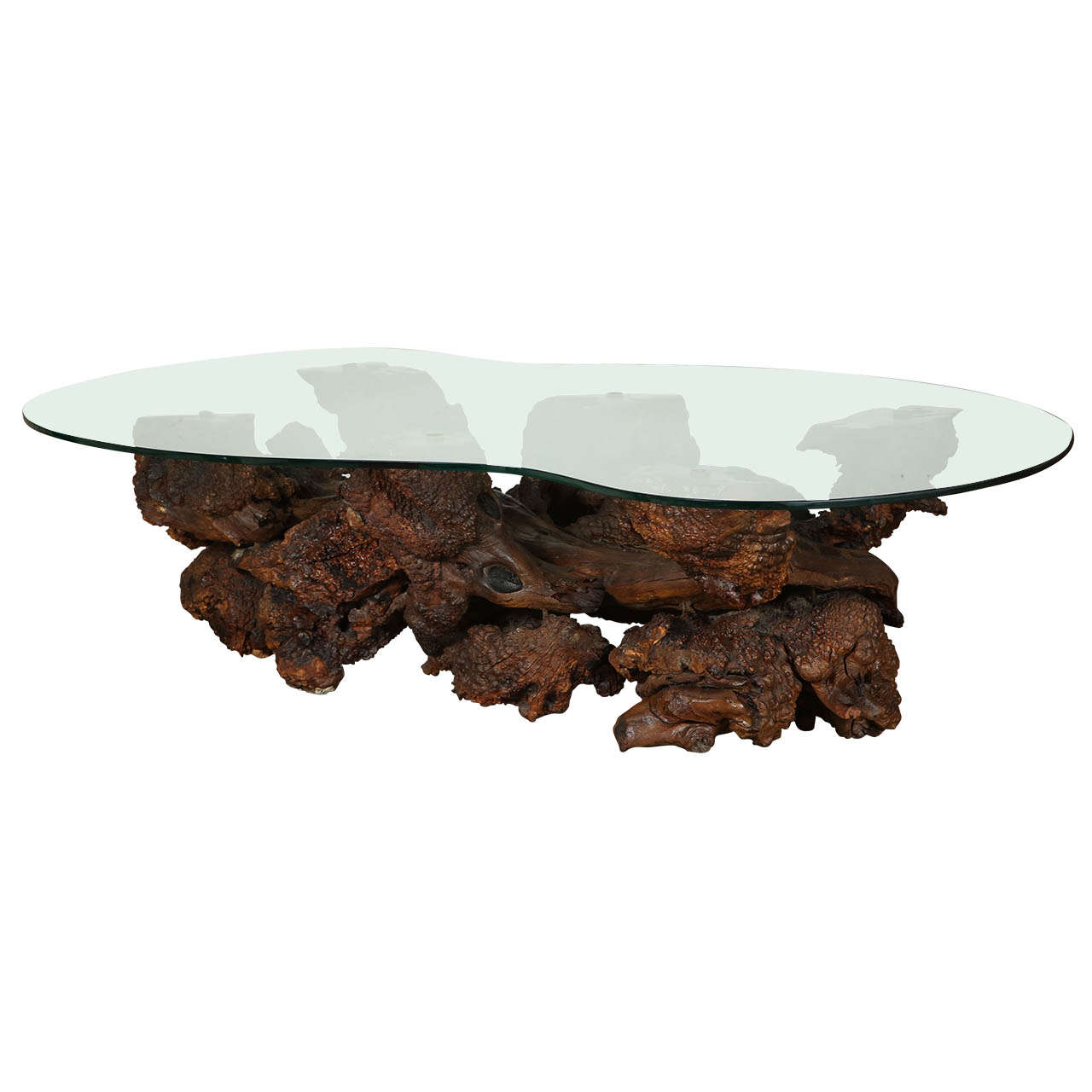 Burl Coffee Table: Spectacular Sculptural Large Burl Driftwood Coffee Table