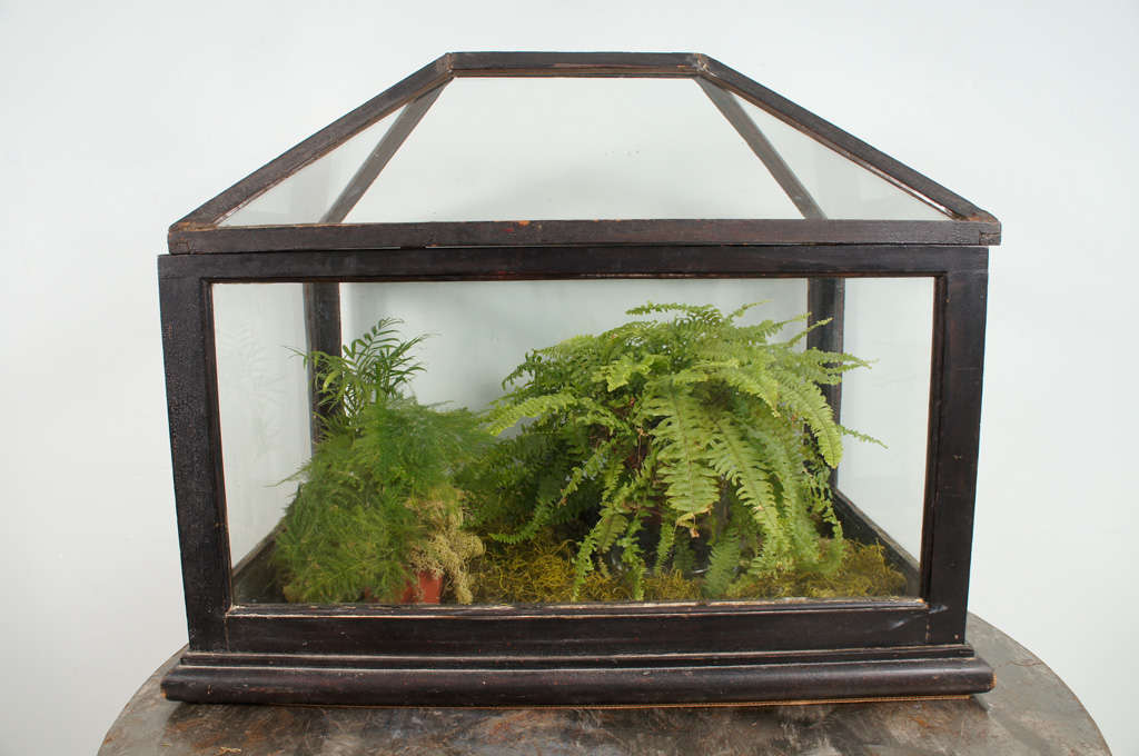 Also known as a Wardian case. Mahogany and glass terrarium of rectangular outline with pitched roof. Molded base and zinc liner tray.