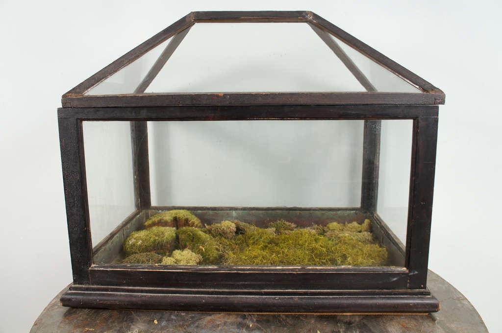 Victorian Mahogany and Glass Terrarium For Sale 1