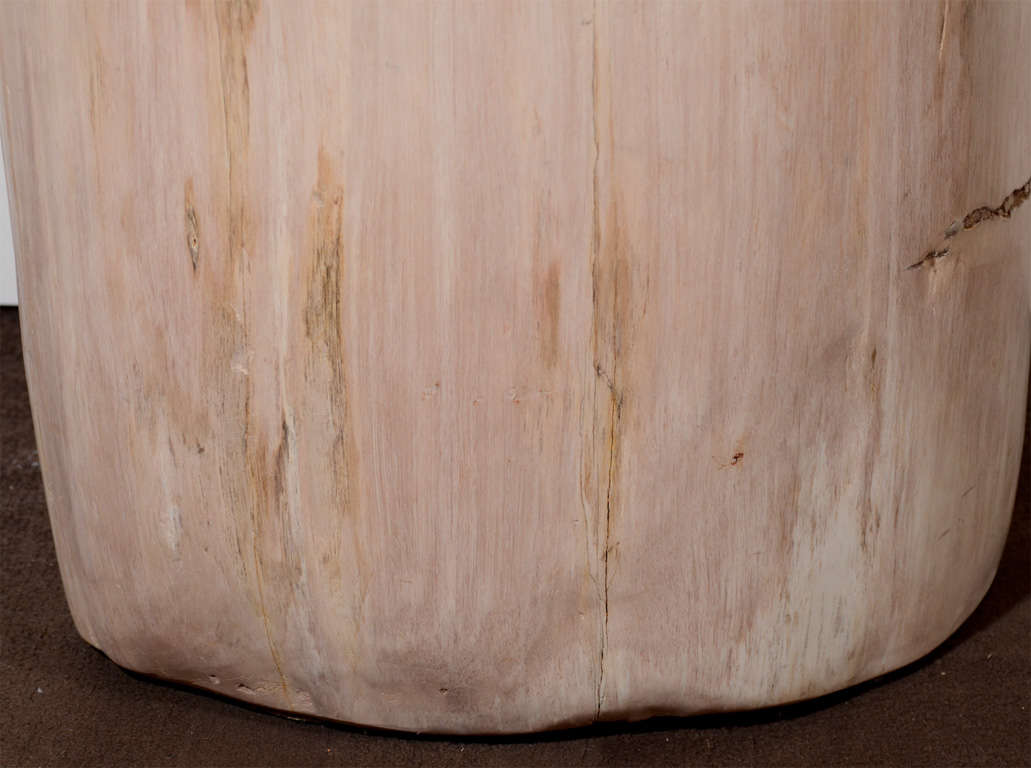 Exquisite Natural Petrified Teak Wood Side Table Or Stool