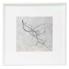 Christopher Sharples - Tree Fragment