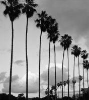 """""""La Jolla Palms"""", La Jolla, CA, 2002"""