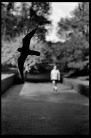 Bird Walker