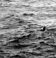 Man in the Ocean, Coast of Maine