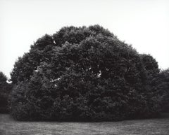 Magnolia Kobus #1