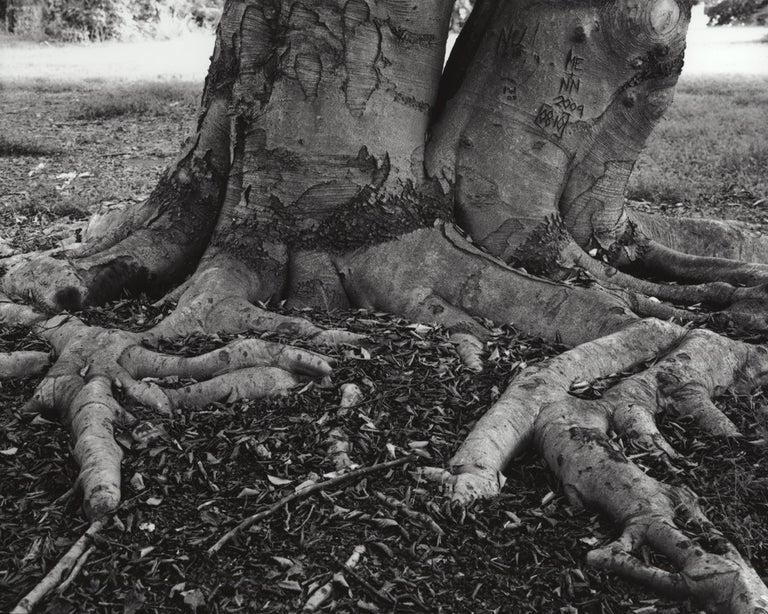 Jose Picayo Still-Life Photograph - Fagus Sylvatica - European Beech
