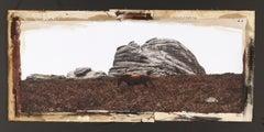 """Chestnut at Haytor Rock"", Dartmoor, UK, 2010"