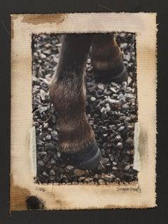 Pony Shoes, Dartmoor UK