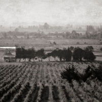 Carcassonne Vineyard, Carcassonne France