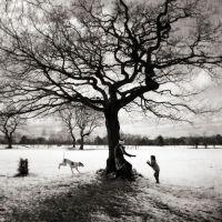 Snowy Oak, Marple Cheshire
