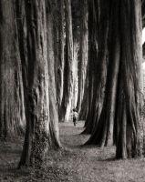 Tree Runner, Plas Newydd Wales
