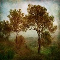Biblical Tree, Majorca, Spain