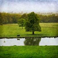 Cheshire Plain, Beeston, Cheshire, U.K.