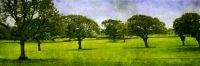 """English Meadow- Adlington, U.K."""