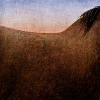 Shire Horse Crop