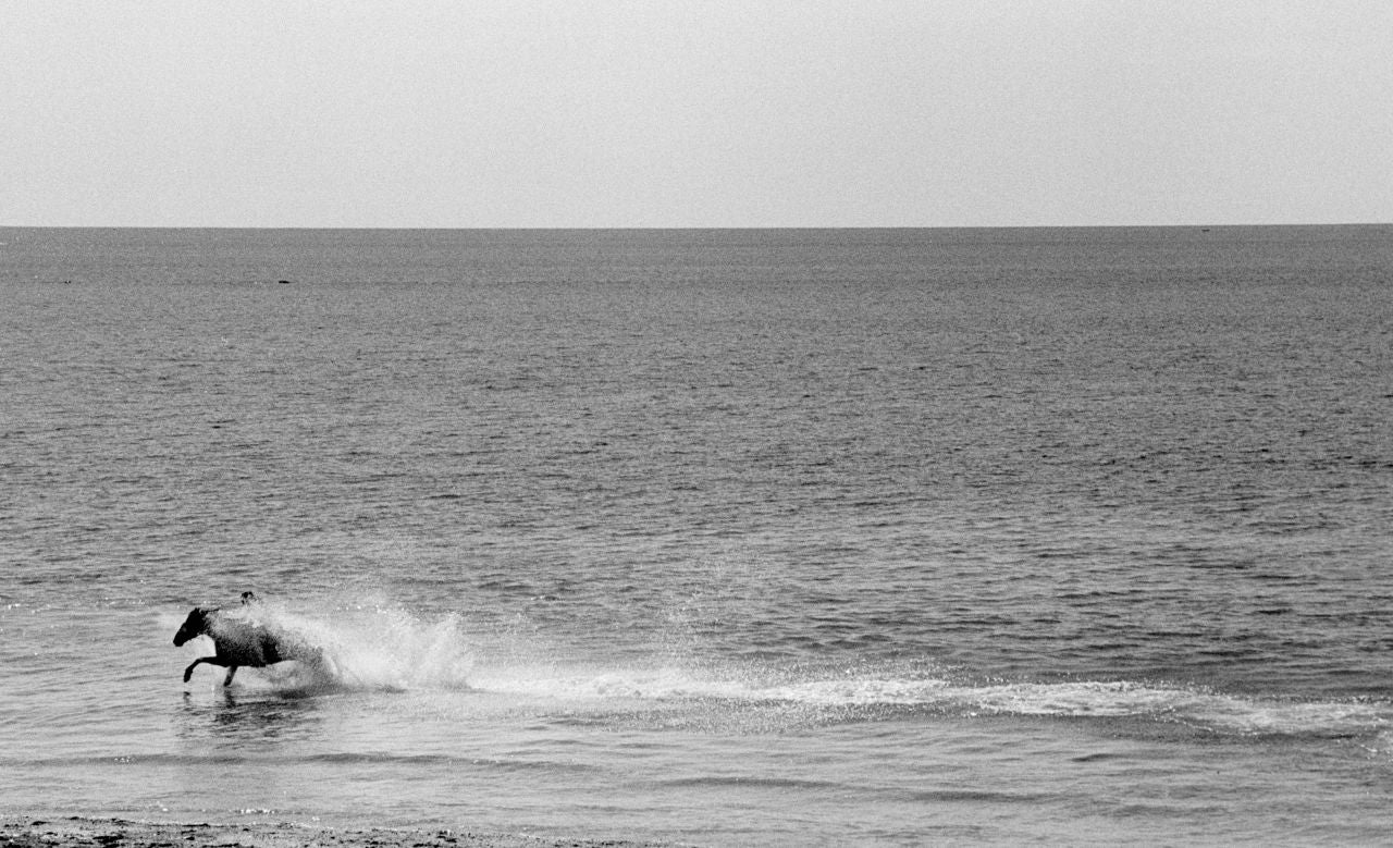Robin Rice Black and White Photograph - Horse in the Celtic Sea, Penzance, Cornwall, UK