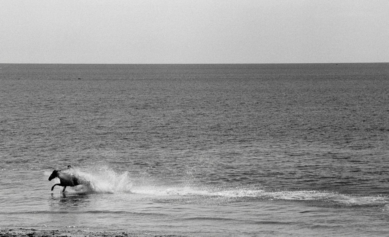 Horse in the Celtic Sea, Penzance