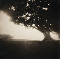 """Pepperdine Tree"", 2001"