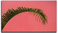 Single Frond Palm