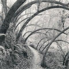 Along Huckleberry Path