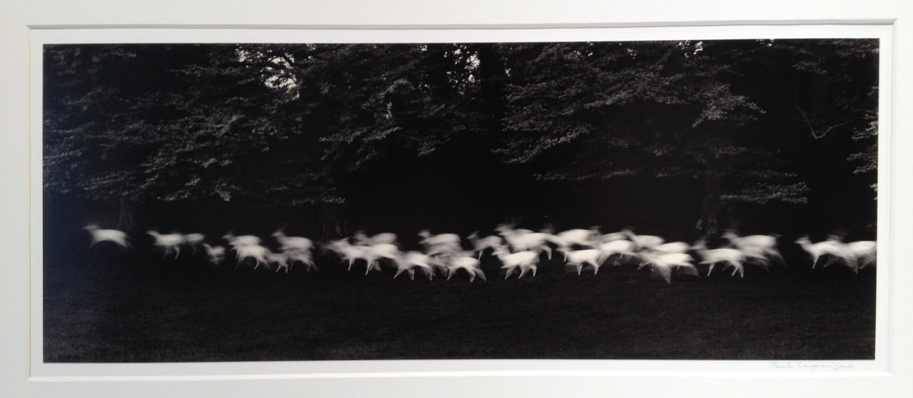 Running White Deer - Photograph by Paul Caponigro