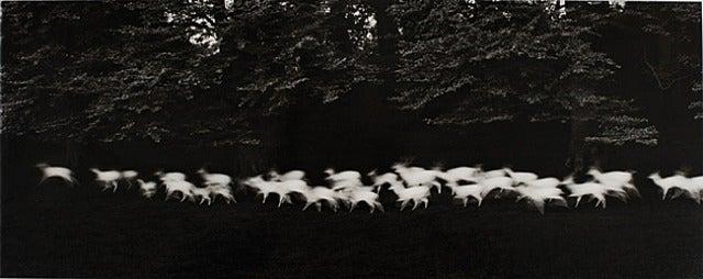 Running White Deer