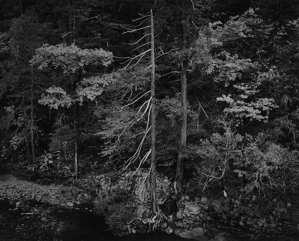 Ansel Adams Landscape Photograph - Forest and Stream, Northern California