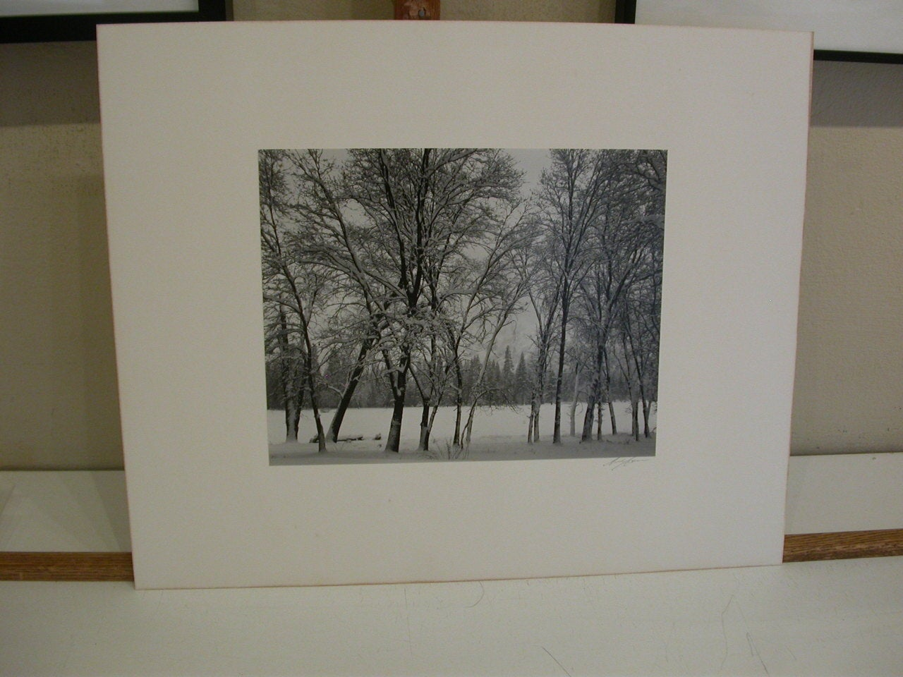 Young Oaks, Winter - Gray Black and White Photograph by Ansel Adams