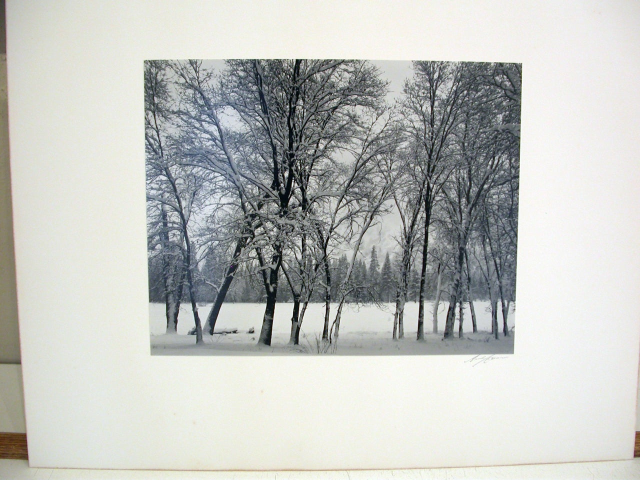Young Oaks, Winter - Photograph by Ansel Adams