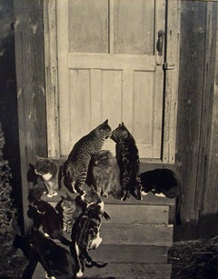 Cats at Doorway and Cats on Rocks (2 photographs), 1944