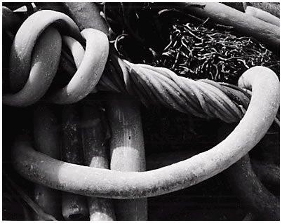 Kelp, 1930