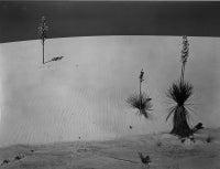 New Mexico, 1941