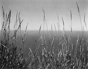 Edward Weston Black and White Photograph - Grass Against Sea