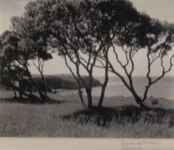 Carmel, Trees, Circa 1940