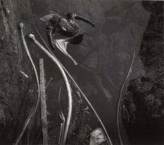 Pelican, 1945
